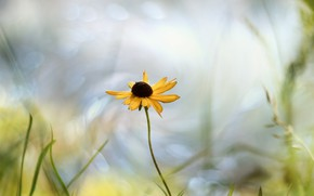 Picture flower, summer, nature