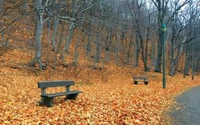 Picture autumn, the city, Park, bench