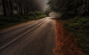 Picture road, forest, trees, nature, haze