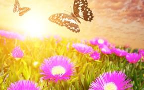 Picture butterfly, flowers, meadow