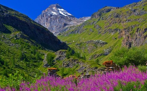 Picture the sky, flowers, mountains, Italy, Valle d'aosta