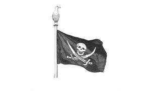 Wallpaper bird, flies, pirate, flag