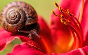 Picture flower, snail, antennae, crawling