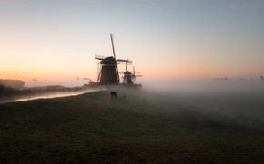 Picture field, fog, horses, morning, mill