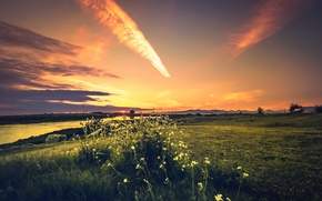 Picture field, summer, nature, morning