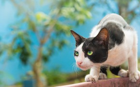 Picture cat, cat, hunting, observation