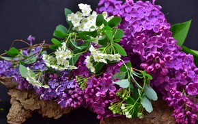 Picture spring, Lilac, flowering