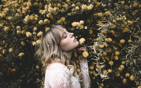 Picture flowers, profile, Alexandra Cameron, Yellow spring