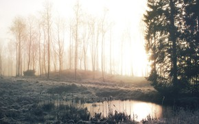 Picture winter, frost, forest, grass, trees, fog, lake, dawn, morning, reed, cattail, frost