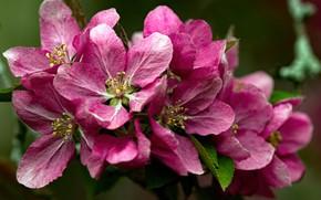 Picture macro, pink, spring, flowering