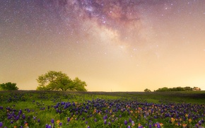 Picture flowers, meadow, The milky way, galaxy, Texas, Lupin, starry sky, Indian paintbrush