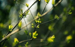 Picture Macro, Nature, Spring, Branches, Kidney