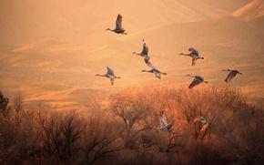 Wallpaper trees, flight, light, cranes, birds