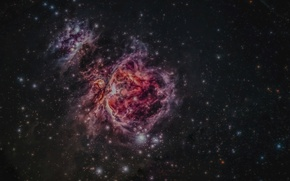 Picture Nebula, is, Orion, below, Belt