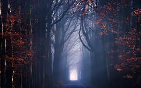 Picture road, autumn, light, trees, foliage, haze