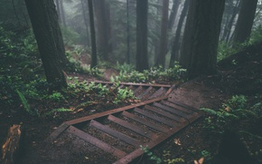 Picture forest, leaves, trees, branches, the descent, ferns, steps