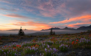 Picture field, sunset, flowers, nature, beauty, harmony
