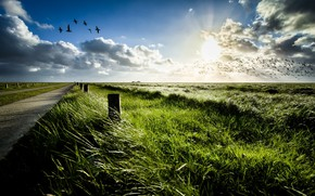 Picture road, field, birds, morning