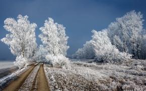 Wallpaper frost, road, birch, winter
