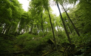 Picture Nature, Trees, Forest, Nature, Forest, Trees