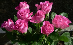 Picture roses, buds, pink, roses, Buet