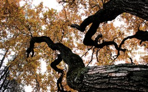 Picture autumn, leaves, tree, bark, oak, autmn, autumn in the Park, oak