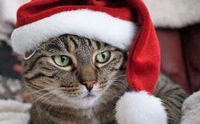 Wallpaper cat, portrait, Santa, face, cap