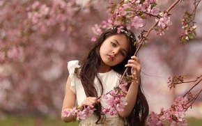 Picture branches, cherry, mood, spring, girl, flowering, flowers, bokeh