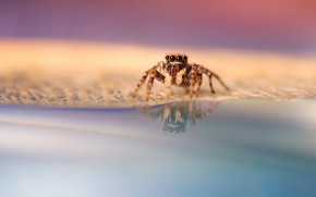 Picture eyes, legs, spider