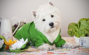 Picture flower, dog, Lily, costume, Puppy, Baby