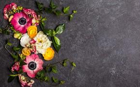 Wallpaper background, twigs, Ranunculus, flowers, flowers
