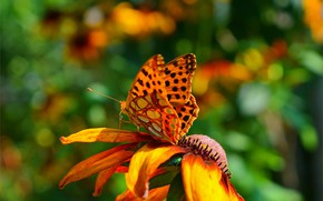 Picture Macro, Spring, Butterfly, Flower, Flower, Spring, Macro, Butterfly