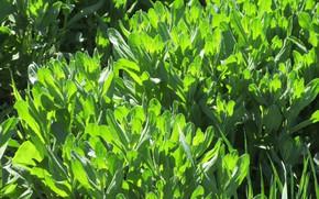 Picture grass, plants, Sunny, mamala ©