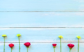 Picture flowers, background, tree, Board, colorful, chrysanthemum, wood, texture, blue, flowers, background, wooden