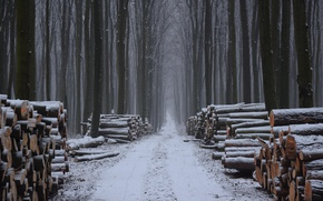 Picture winter, forest, wood