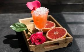Picture glass, rose, ice, juice, citrus, drink, grapefruit