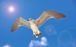 Picture bird, wings, Seagull, beak, Blik