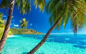 Wallpaper the sun, tropical, summer, sea, beach, sea, beach, palms, shore, island, paradise, palm trees