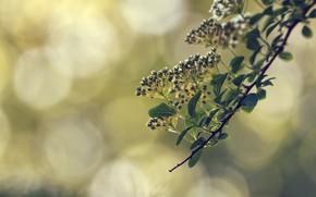 Picture macro, flowers, branch, spring, bokeh