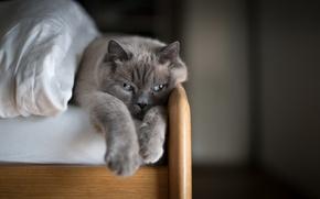 Wallpaper cat, comfort, house, bed