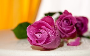 Wallpaper drops, buds, yellow, pink, roses, bouquet, background, blurred, flowers