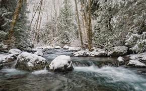 Picture Winter, River, Snow