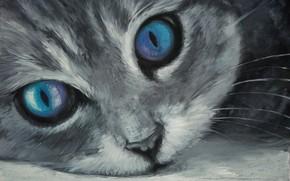 Picture cat, muzzle, blue eyes