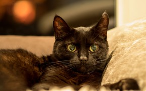 Picture eyes, cat, black