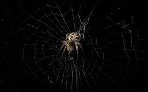 Picture macro, web, spider