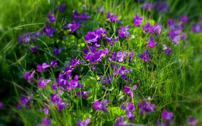 Picture grass, blur, violet