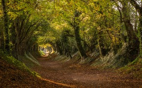 Picture the tunnel, road, England, Halnaker, trees, Roman road, Halnaker, Stane Street, the tunnel, West Sussex, ...
