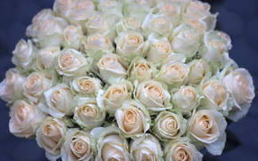 Picture drops, roses, buds, bunch