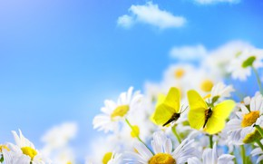 Picture clouds, butterfly, chamomile