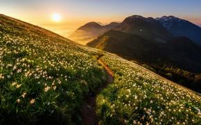 Wallpaper mountains, light, morning, flowers